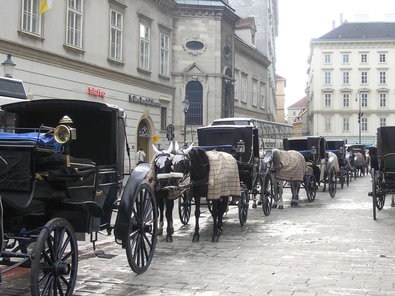 Horses with doilies in Vienna
