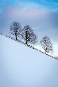 Trees, Austria, 2008