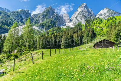 The mountains and fields covered with yellow flowers