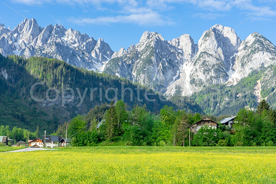 Mountains above fields of yellow flowers
