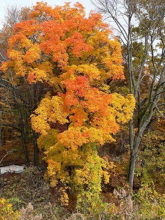 A little color along the trail.