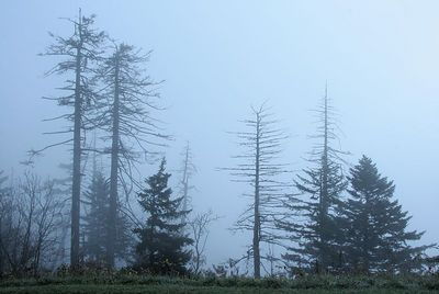 Early morning fog on the top of Clingman's Dome in Great Smoky Mountains NP.