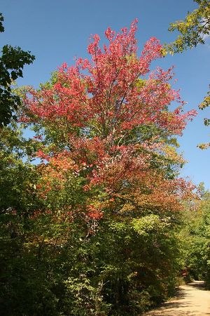 Color on the Tatham Gap Road.