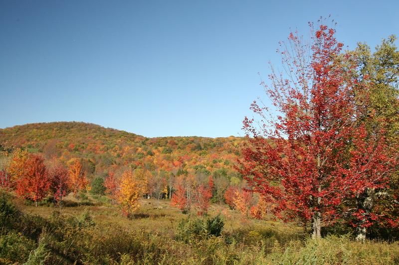 North Branch color.