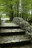 Bridge to Buddha