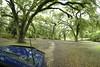 Crazy Trees int eh Jungle Garden