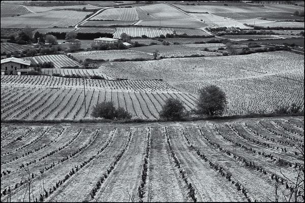 The Riojan landscape