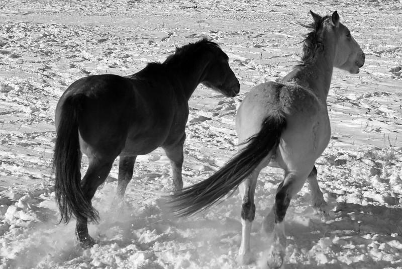 Morley Horses