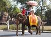Elephants outside Wat Phra Ram, Ayutthaya