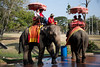 Elephants getting drink on hot day, Ayutthaya