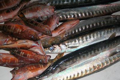 Garoupa and Barracuda - Azores / Portugal