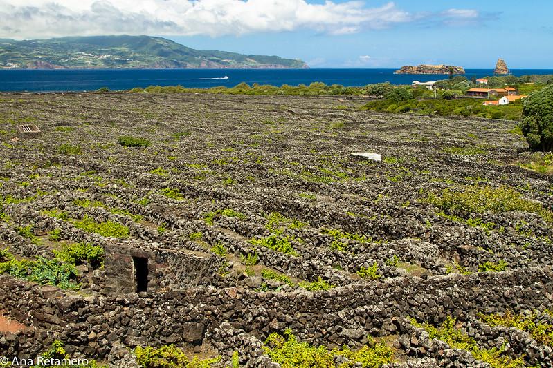 Currais do Pico, al fondo la isla de São Jorge
