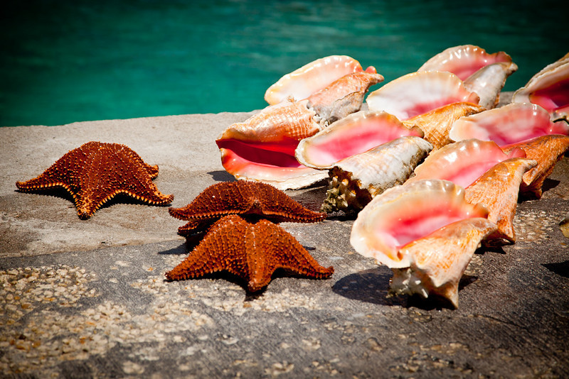 STARFISH AND CONCH SHELLS