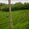 Most Balinese live in-between.