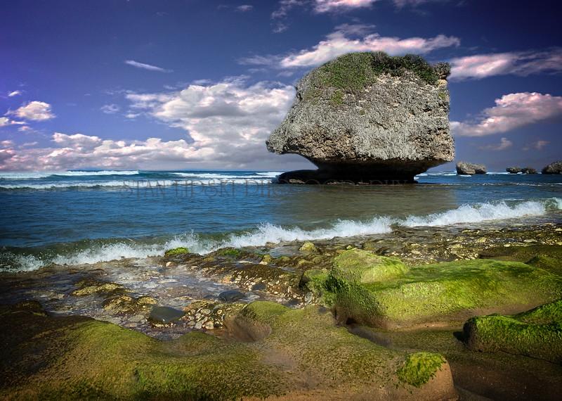 THE ROCK OF BARBADOS