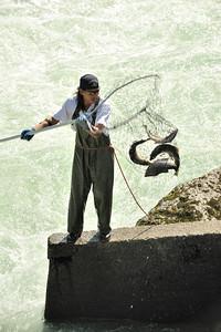 Morristown Canyon, BC, Aug 2008 Salmon Spawn
