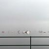 Oak Bay in the smoke