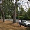 Mayfair Drive, Victoria
