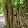 Tree Lends a Hand