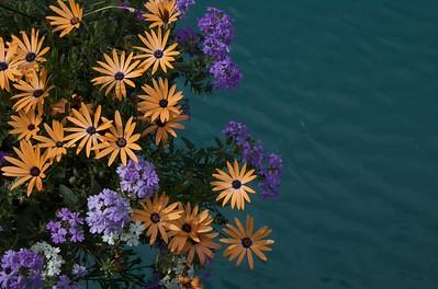 Flowersonbridge