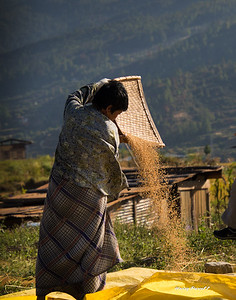 """Winnowing rice to remove the chaff. They whistle loudly to """"call the wind""""."""