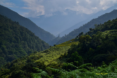 Bhutan has 71% forest coverage for the country, and it is written into their constitution to keep the forest. Bhutan is the ONLY carbon positive country in the world.