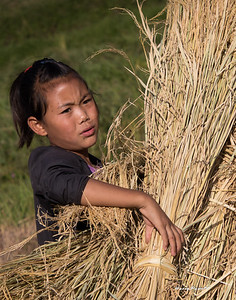 The whole family is involved in the harvest.