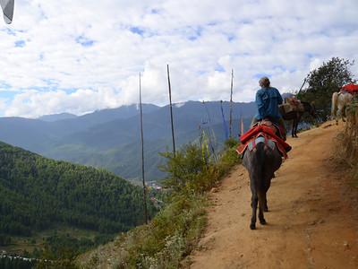riding horses to Tiger's Nest. Harry walked with a guide and it about killed him. Start at 7,000 ft and take a rough trail to 10,000 ft
