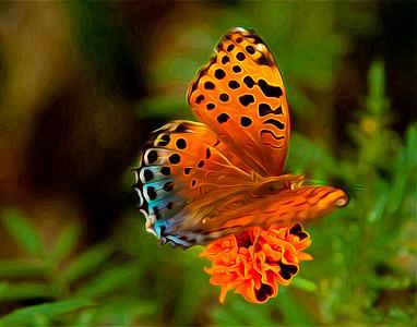 unknown orange butterfly