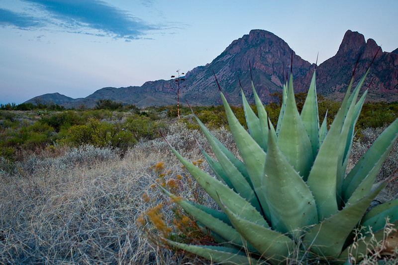 AGAVE ROSETTE BELOW THE WESTERN FACE OF THE CHISOS MOUNTAINS