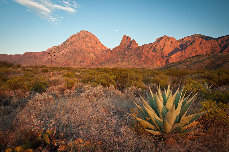 "AGAVE ""BASKING"" IN LATE EVENING LIGHT AT THE WESTERN FACE OF THE CHISOS"