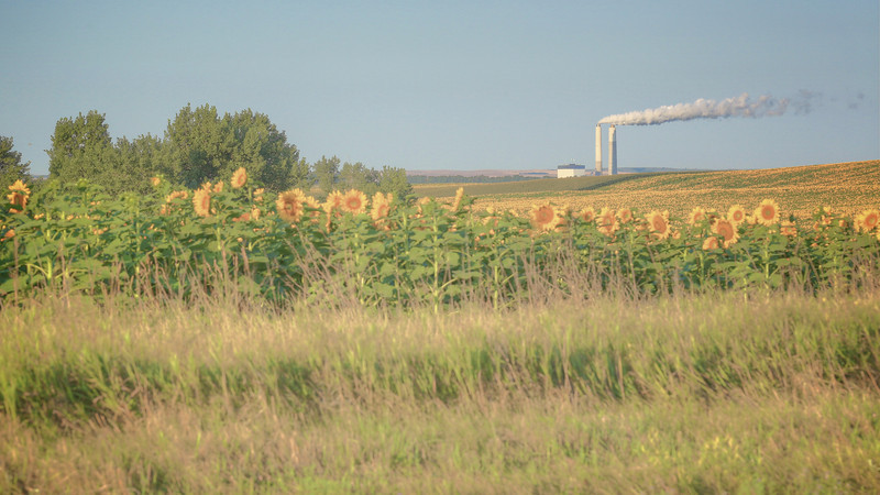 BNI Coal Sunflowers 1