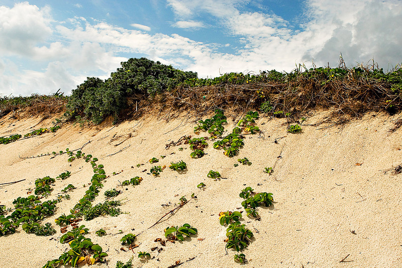 COZUMEL BEACH DUNE