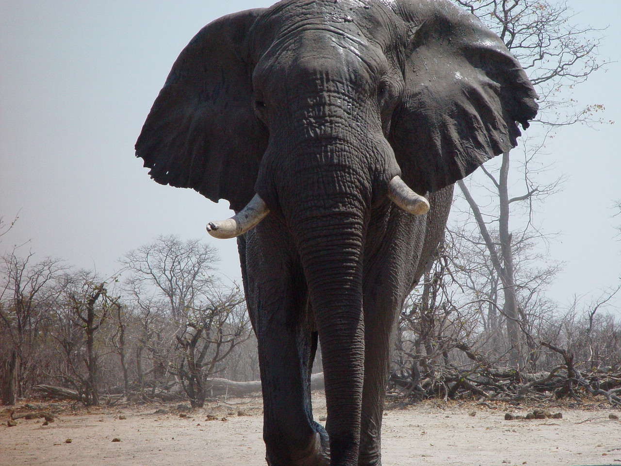A view from an Elephant hide