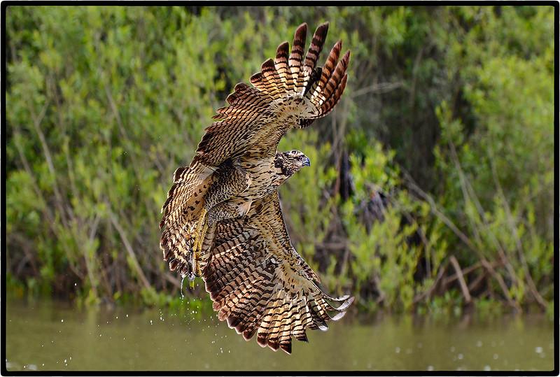 Wing Spread