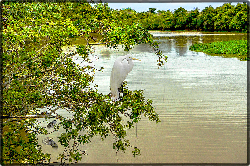Pantanal's River Wildlife