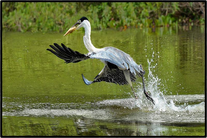 Flight Fishing