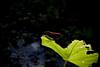 Babinda09-AlexGardner-091101-02