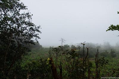Rainy View