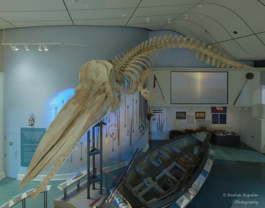 Whale Skeleton at the Nantucket Whaling Museum