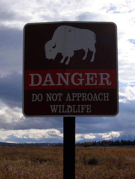 IMG_2417 danger bison