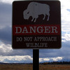 IMG_2417 danger bison
