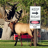 DSC_5994 bull elk with danger sign 8X10