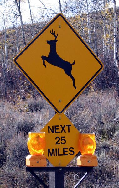 IMG_2412 deer 25 miles