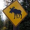 IMG_2414 moose
