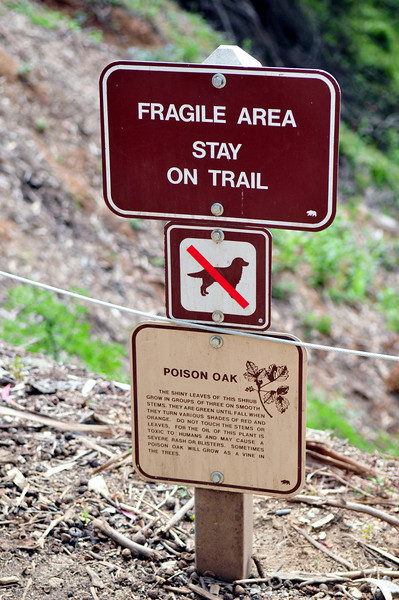 Poison Oak is found everywhere along the Northern California Coastline!  Signs are far and few between so it's important to know how to spot the plant!