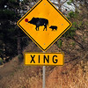 Wild Pig road sign! Carmel Valley Coastline, CA.