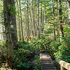 Boardwalk to tip of Cape Flattery