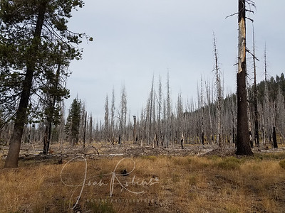 We did pass by many burned out areas. Heartbreaking to think of the displaced wildlife.