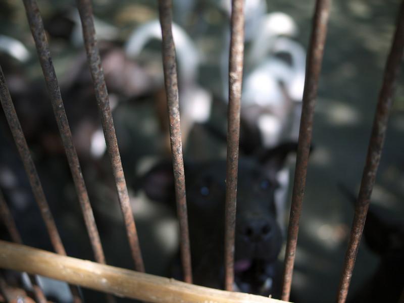 Bali Animal Welfare Association